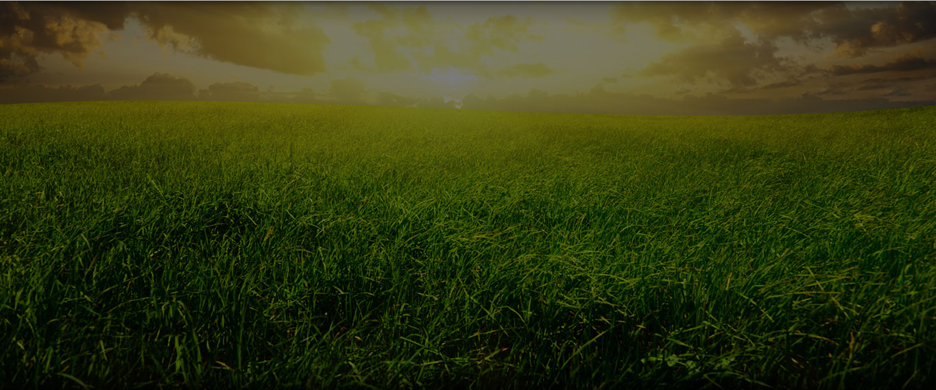 A large outdoor field of grass prefacing Ecore's environmental information.